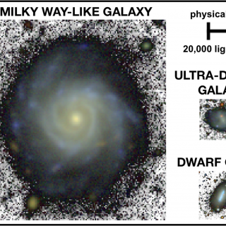 A Milky Way-like spiral galaxy, a dwarf and a faint ultra-diffuse galaxy shown to the same physical scale using images of similar depth.  On average, the diffuse galaxy is 10 times smaller than the Milky Way analogue. Credit: Adapted from Chamba, Trujillo & Knapen (2020).